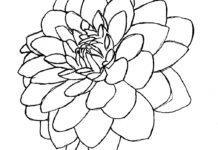 218x150 Dahlia Flower Drawing Best Of Dahlia Drawings Black Dahlia Flower