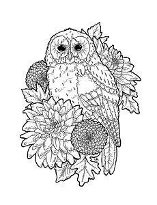 230x300 Dahlia Flower Drawings Fine Art America