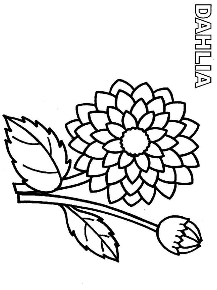 750x1000 Dahlia Flower Coloring Pages. Download And Print Dahlia Flower