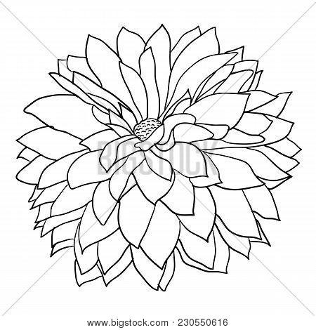 450x470 Dahlia Images, Illustrations, Vectors