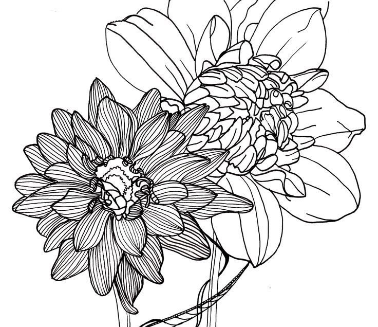 736x636 Flower Line Drawing