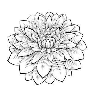 320x320 Line Drawing Dahlia Monochrome Black And White Dahlia Flower