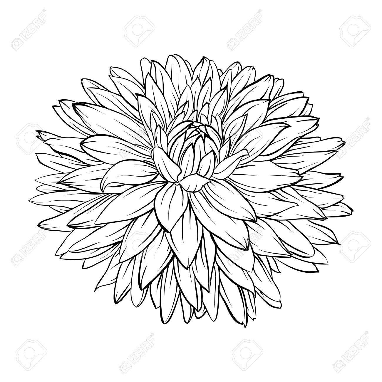 1300x1300 Beautiful Monochrome, Black And White Dahlia Flower Isolated