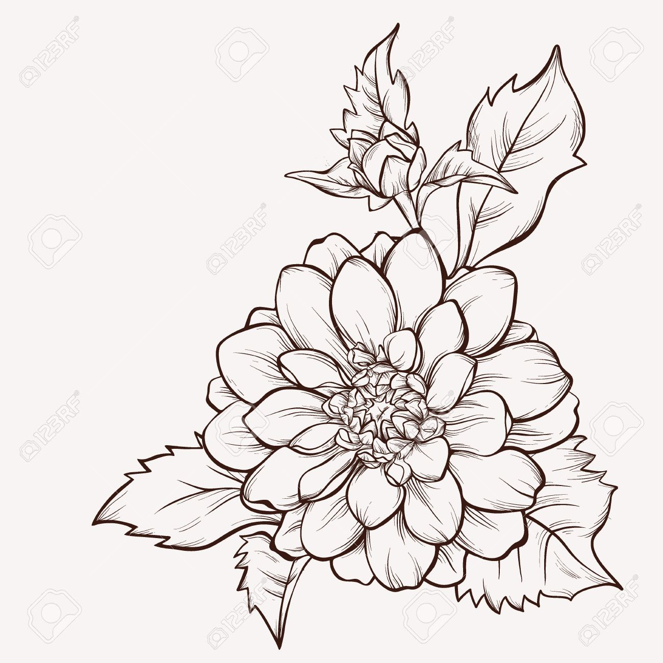 1300x1300 Vector Dahlia Flower Isolated On White Background. Element