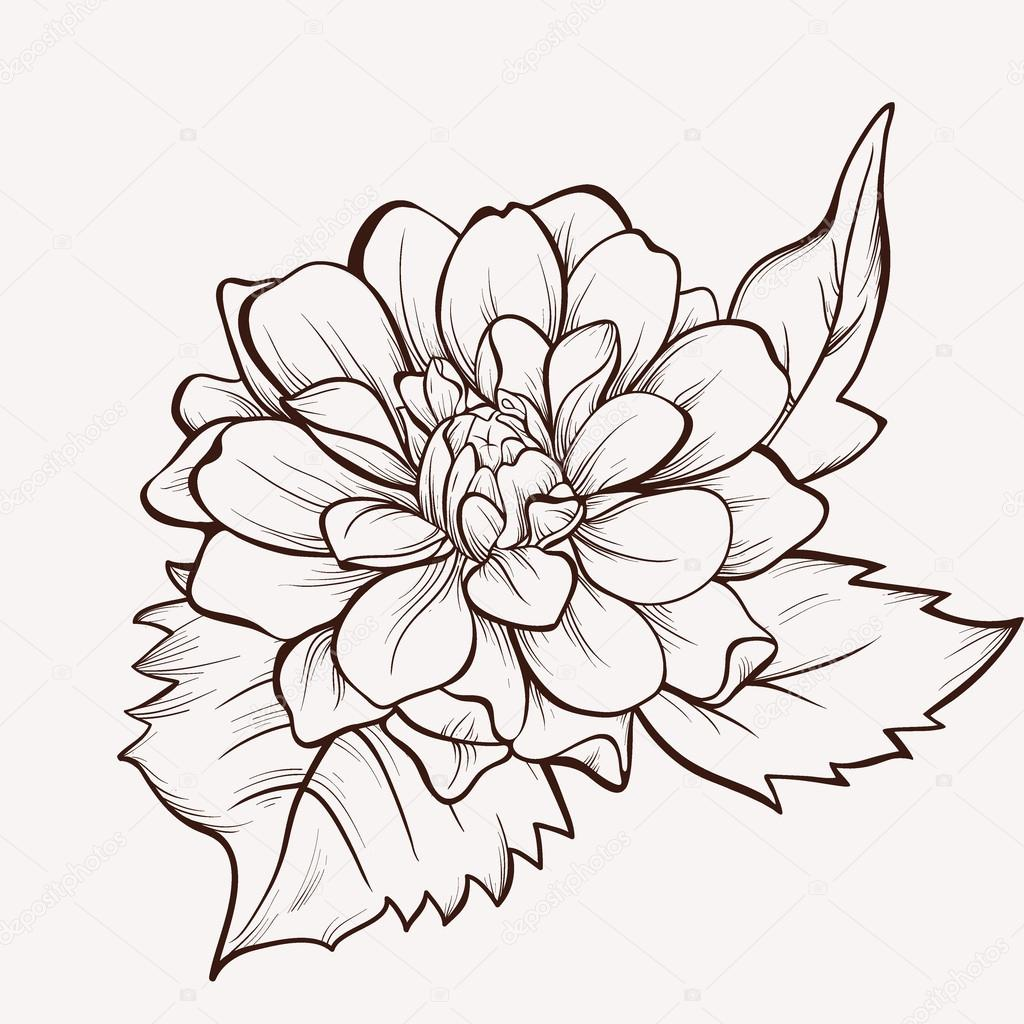1024x1024 Vector Flower Isolated On White Background. Hand Drawn Dahlia