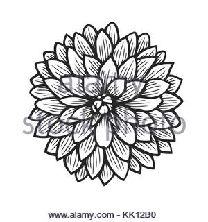 300x320 Dahlia Flower Decoration Sketch Stock Vector Art Amp Illustration