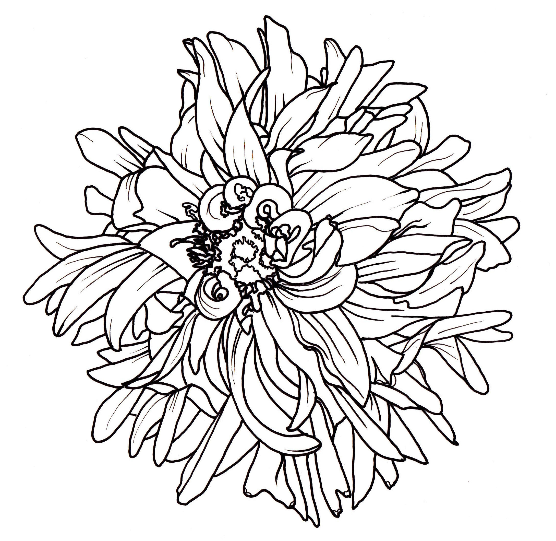 Dahlia flower drawing at getdrawings free for personal use 2178x2118 line drawing izmirmasajfo Gallery
