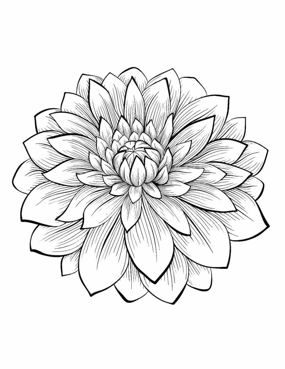 Dahlia flower drawing at getdrawings free for personal use 1185x1530 of the most beautiful s from gallery dahlia flower garden drawing izmirmasajfo