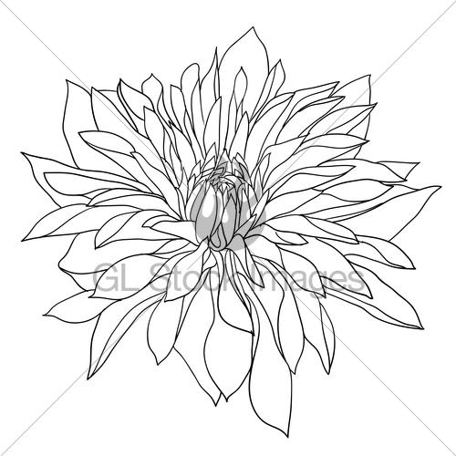 500x500 Beautiful Monochrome Sketch, Black And White Dahlia Flowe Gl