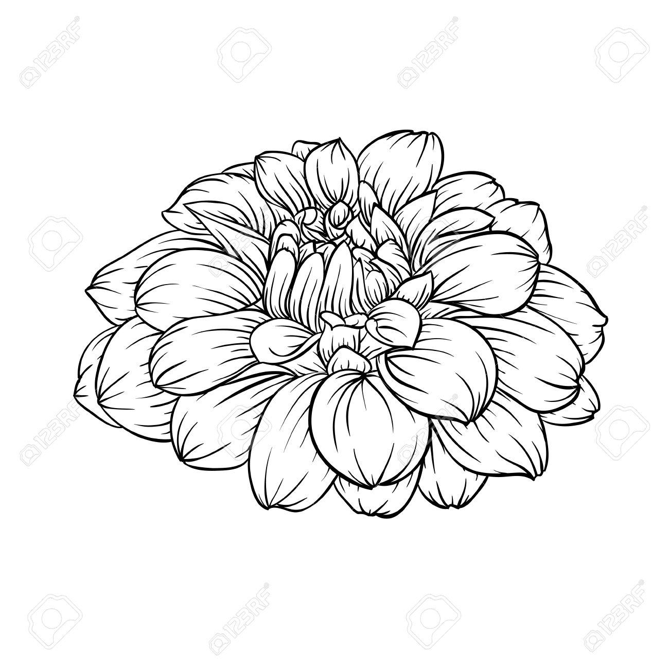 1300x1300 Black Dahlia Flower Drawing Good Flower Drawing Dahlia Drawings