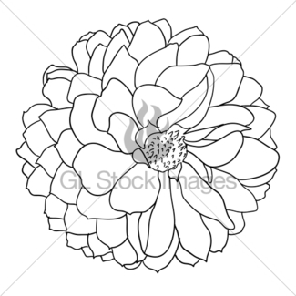 Dahlia Line Drawing at GetDrawings com | Free for personal