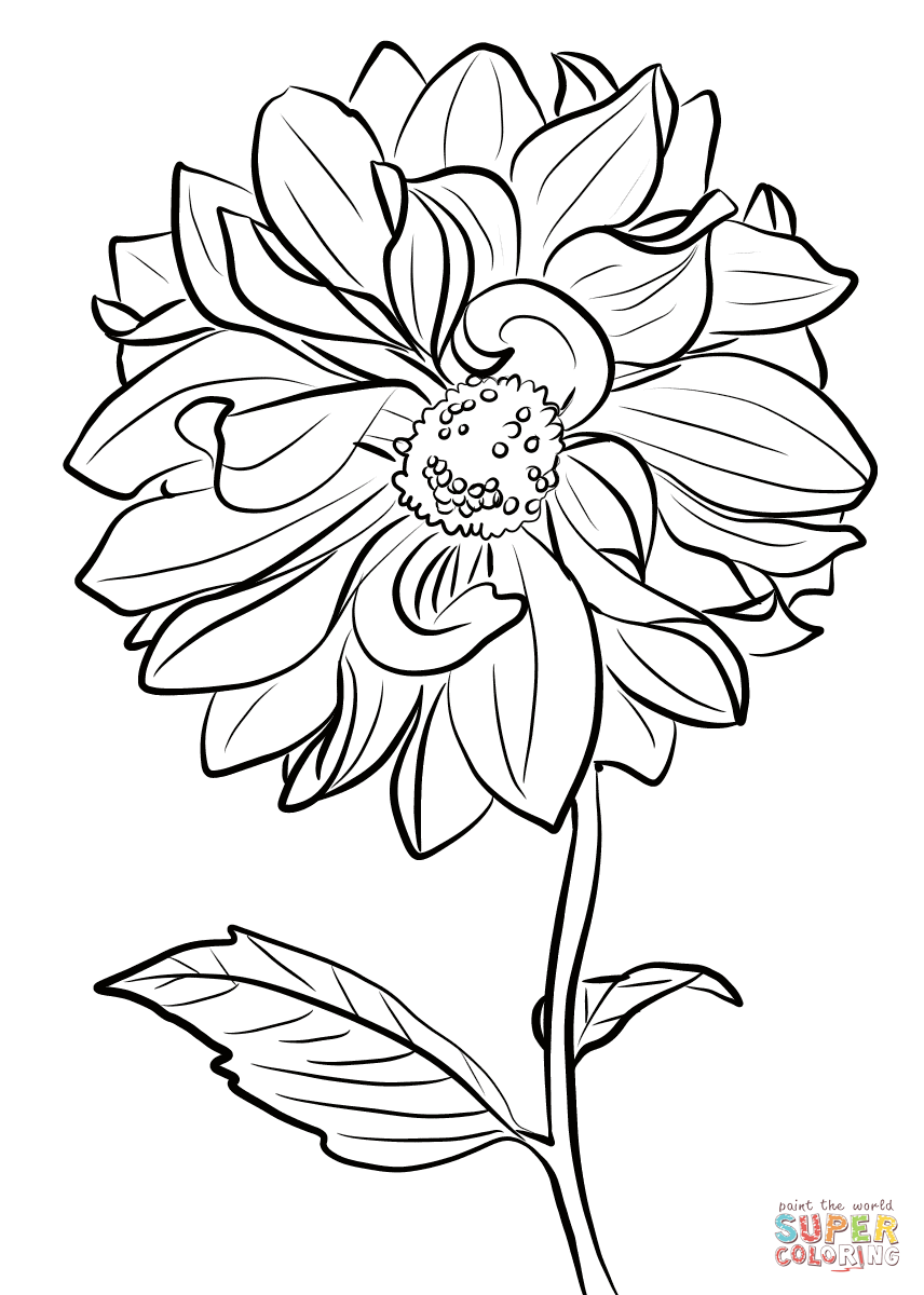 Dahlia Line Drawing At Getdrawings Free For Personal Use
