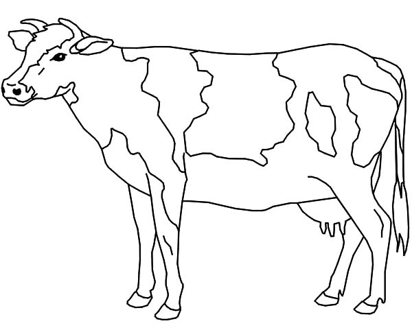600x481 Dairy Cow Ready To Be Milk Coloring Pages