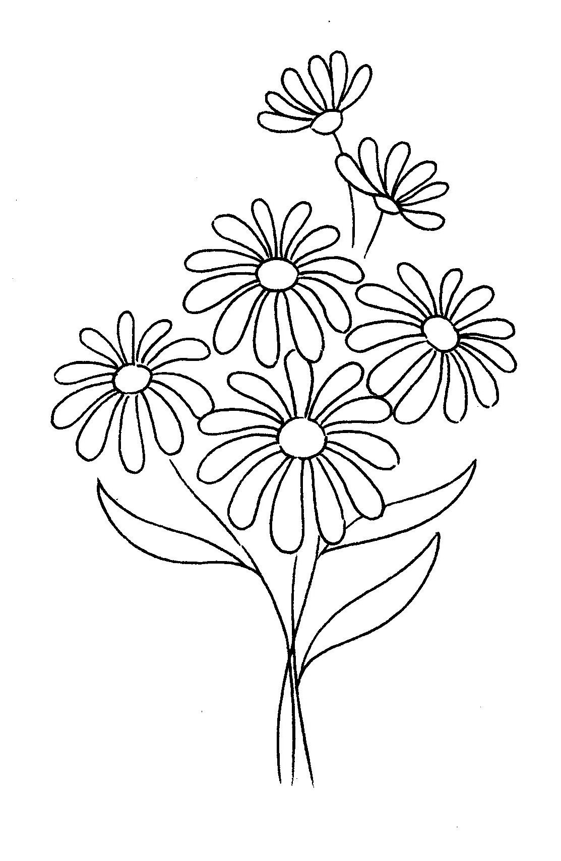 1113x1708 Drawing Of A Daisy Daisy Flower Drawing