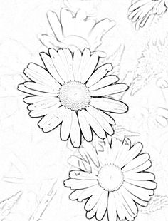 236x310 How To Draw A Daisy Drawing, Sketching How To Dot