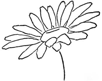 350x280 Step 08 Daisies Drawing The Daisy How To Draw Daisies With Easy