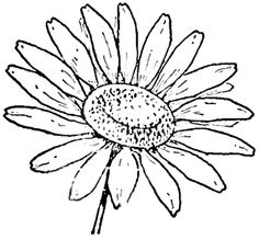 236x219 Step Finished Daisies Drawing The Daisy How To Draw Daisies