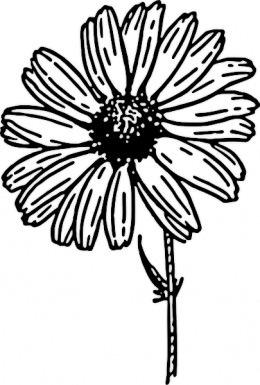 260x385 Beautiful Floral Coloring Pages For Kids Adults Clip Art