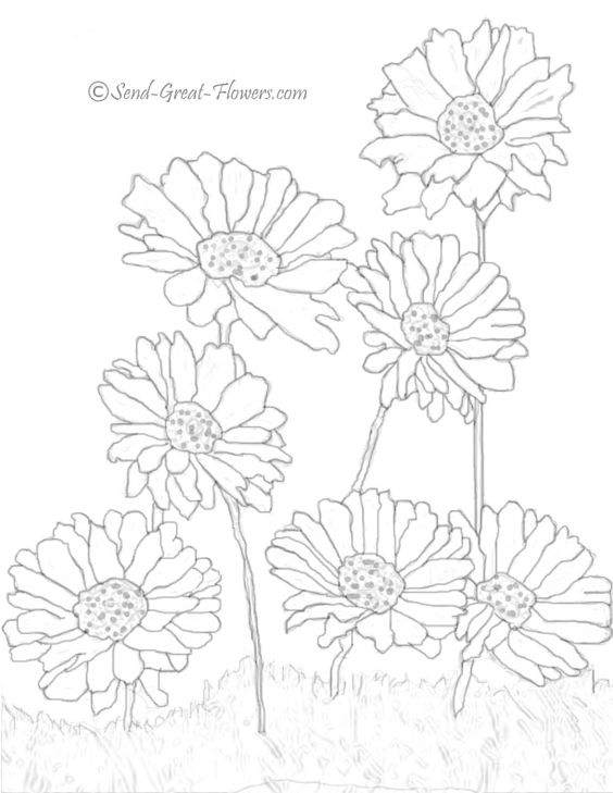 564x729 Daisies And Heather Flowers Pictures