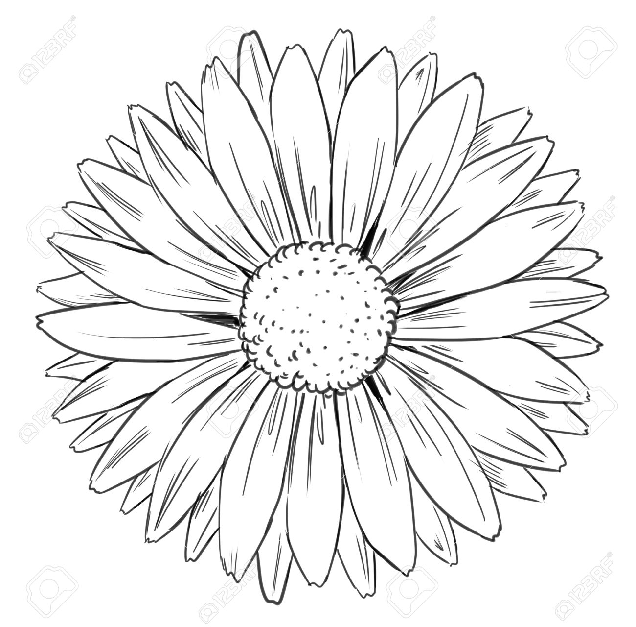 Daisy Drawing At Getdrawings Free For Personal Use Daisy