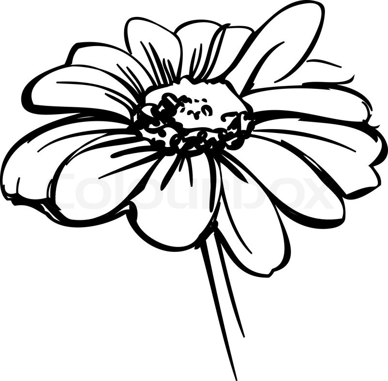 800x785 A Sketch Wild Flower Resembling A Daisy Stock Vector Colourbox