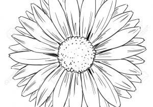 300x210 Daisy Flower Drawings