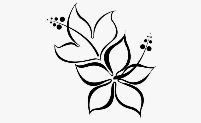 800x491 Daisy Flower Drawings Best Gardening Flower And Vegetables