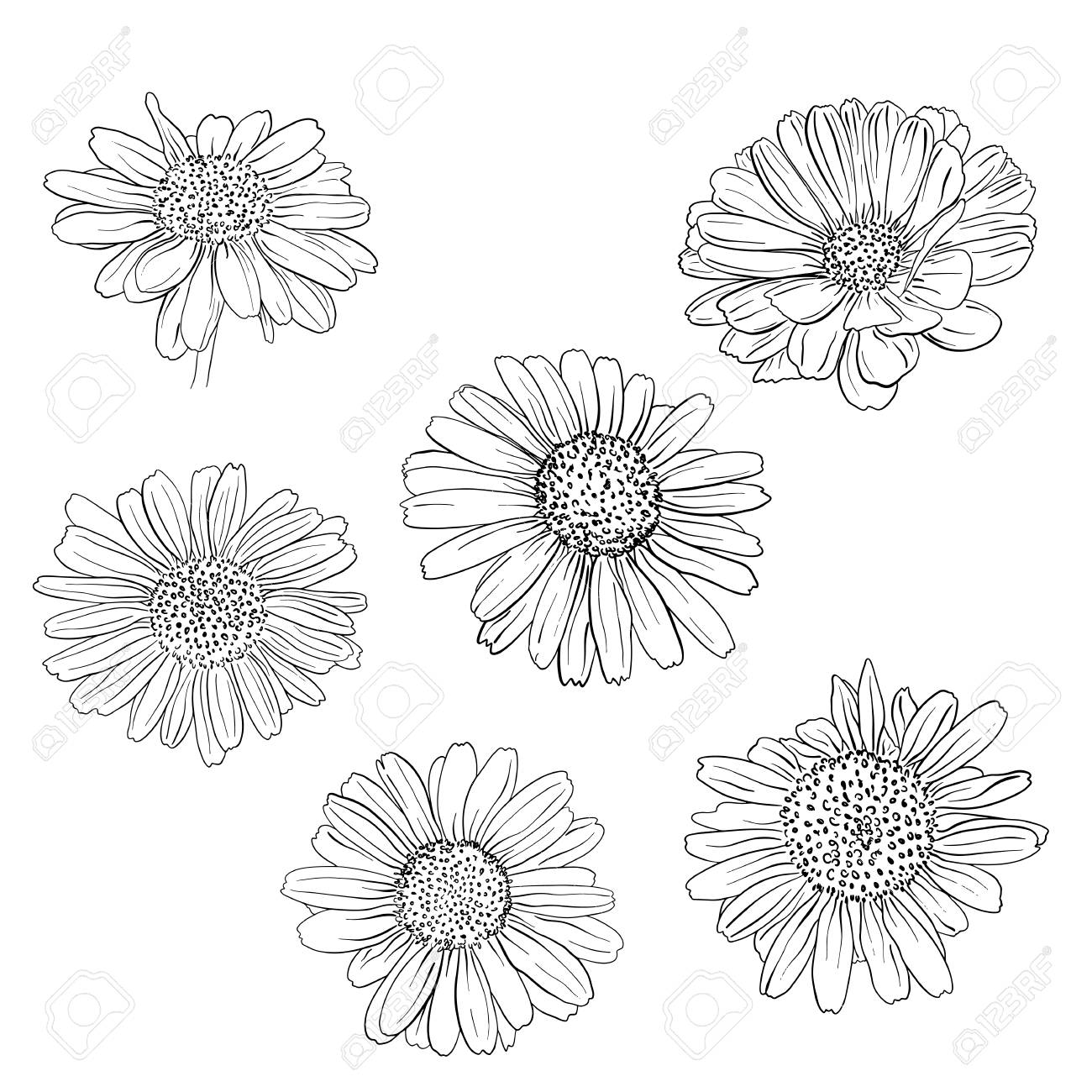 1300x1300 Daisy Hand Drawn Sketches Set. Vector Llustration. Royalty Free