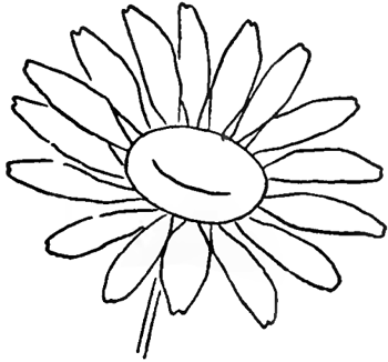 350x326 Drawing The Daisy How To Draw Daisies With Easy Step By Step