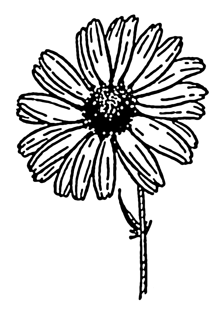 725x1067 Filedaisy (Psf).png