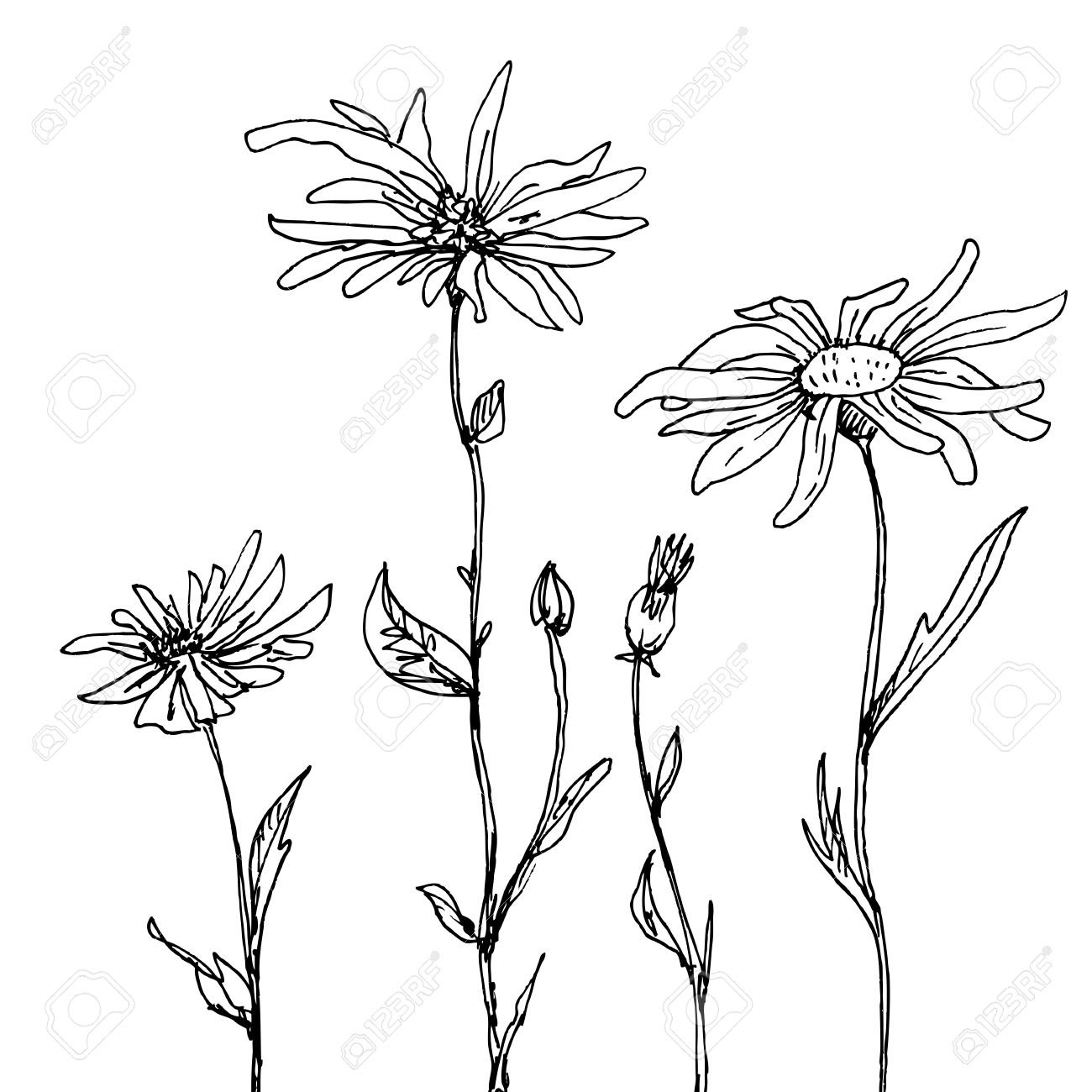 1300x1300 Floral Composition With Ink Drawing Daisy Flowers, Doodle Wild