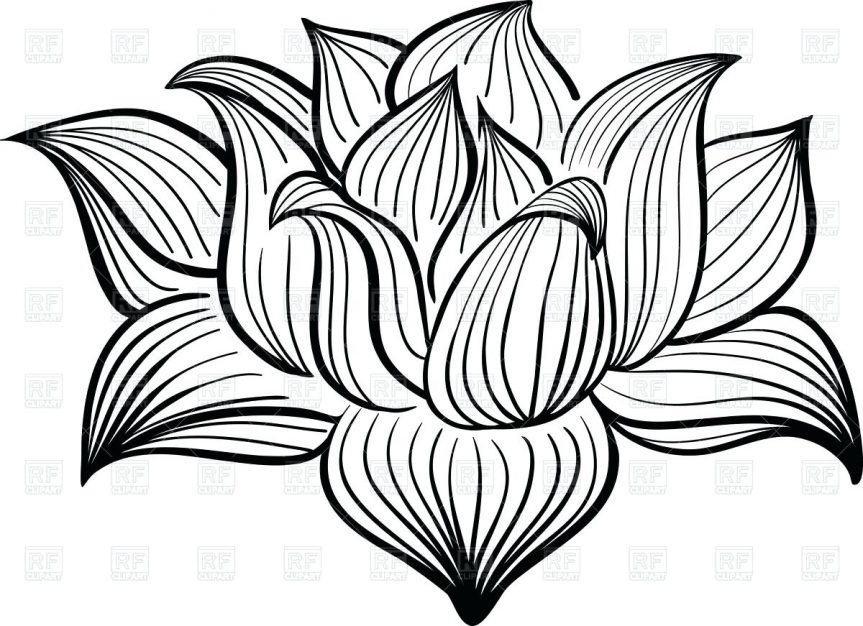 863x626 Lotus Flower Outline Drawing Of Vector Image Hibiscus Vase Daisy