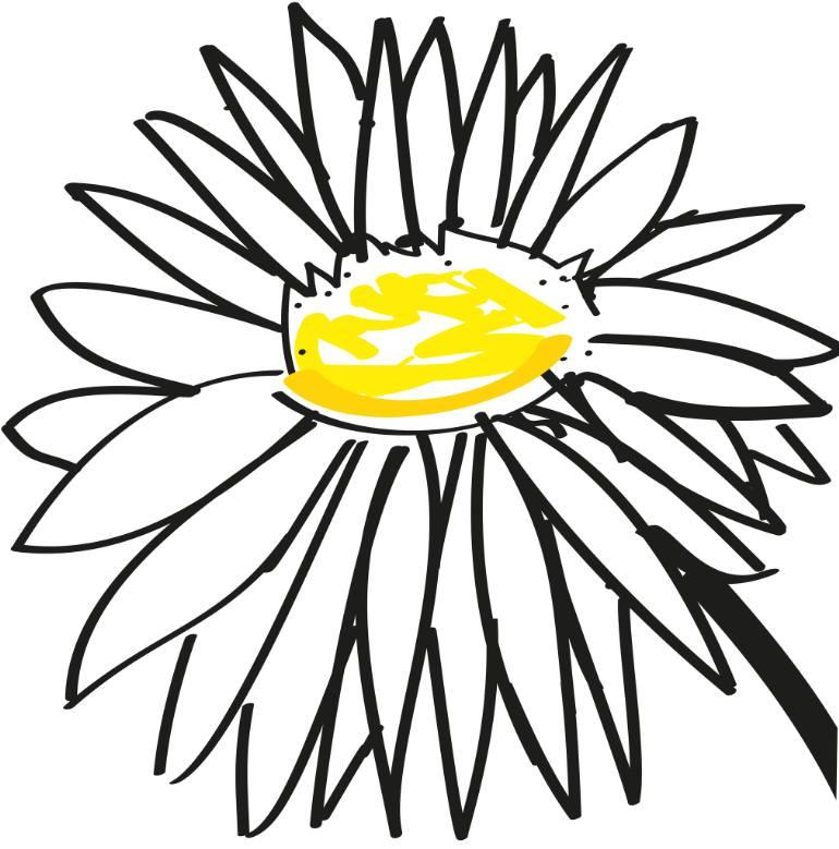 770x779 Saatchi Art Daisy Drawing By Mario Dagrada