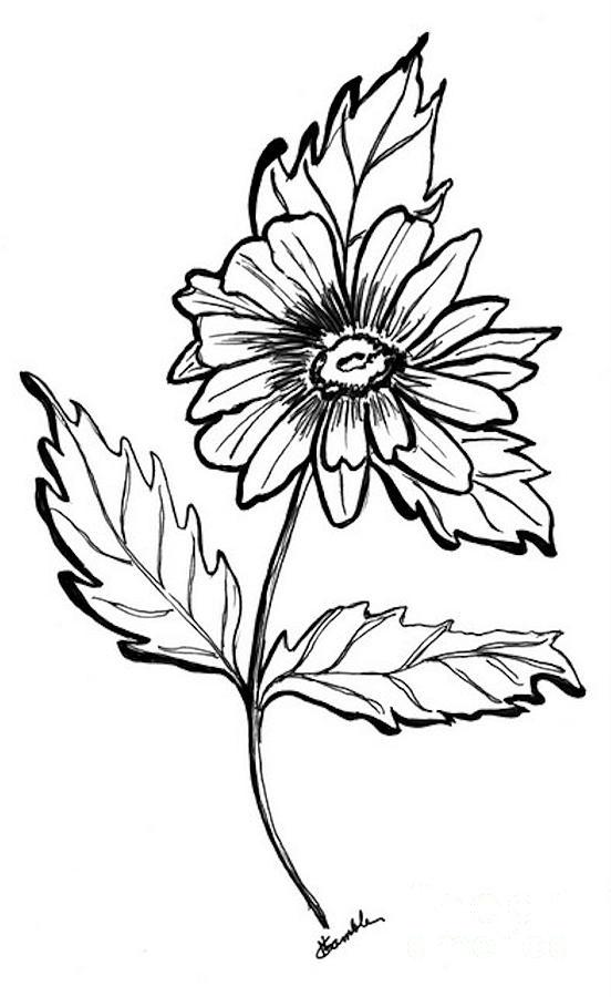 552x900 Daisy Drawing By Nancy Rucker