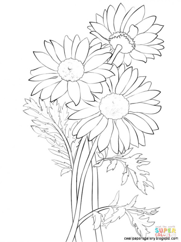 598x800 Daisy Drawings With Color Wallpapers Gallery