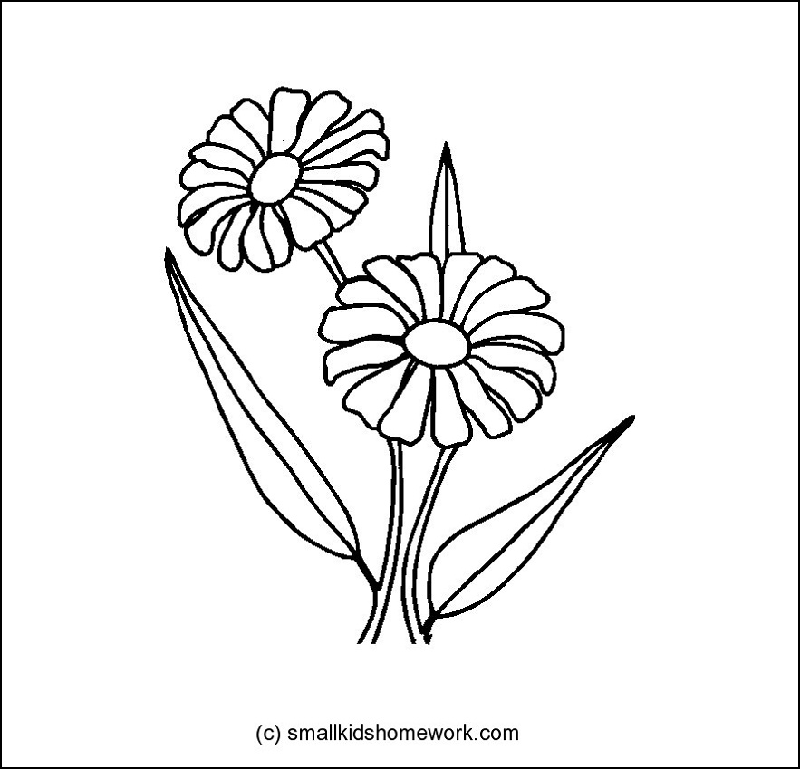 883x849 Daisy Flower Outline And Coloring Picture With Interesting Facts