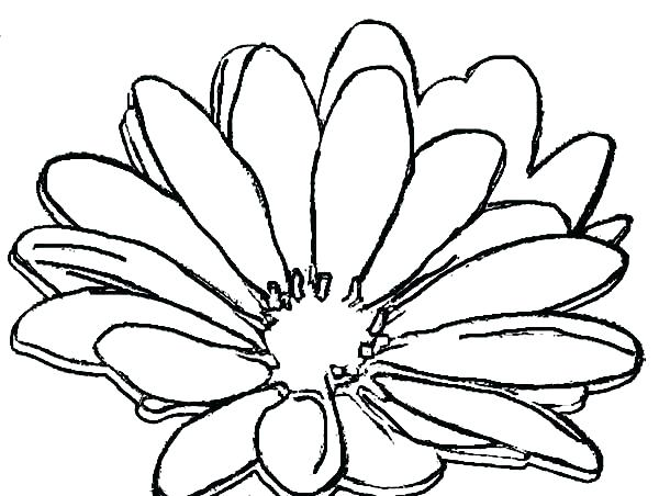 600x452 Flower Garden Coloring Page Daisy Flower Coloring Pages Daisy