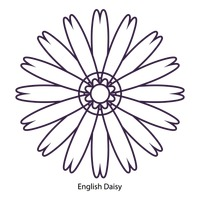 200x200 African Daisy Flower Flowers Blossom Blossoms Outline Outlines