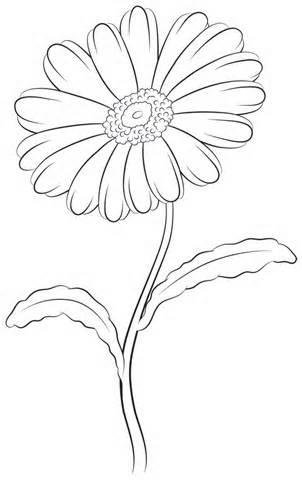 302x480 Daisy Leaf Outline