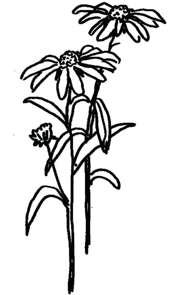 600x1004 Flower Garden Outline Financeintl.club