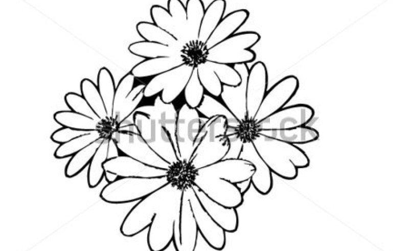 800x491 Black Daisy Flower Outline Gardening Flower And Vegetables