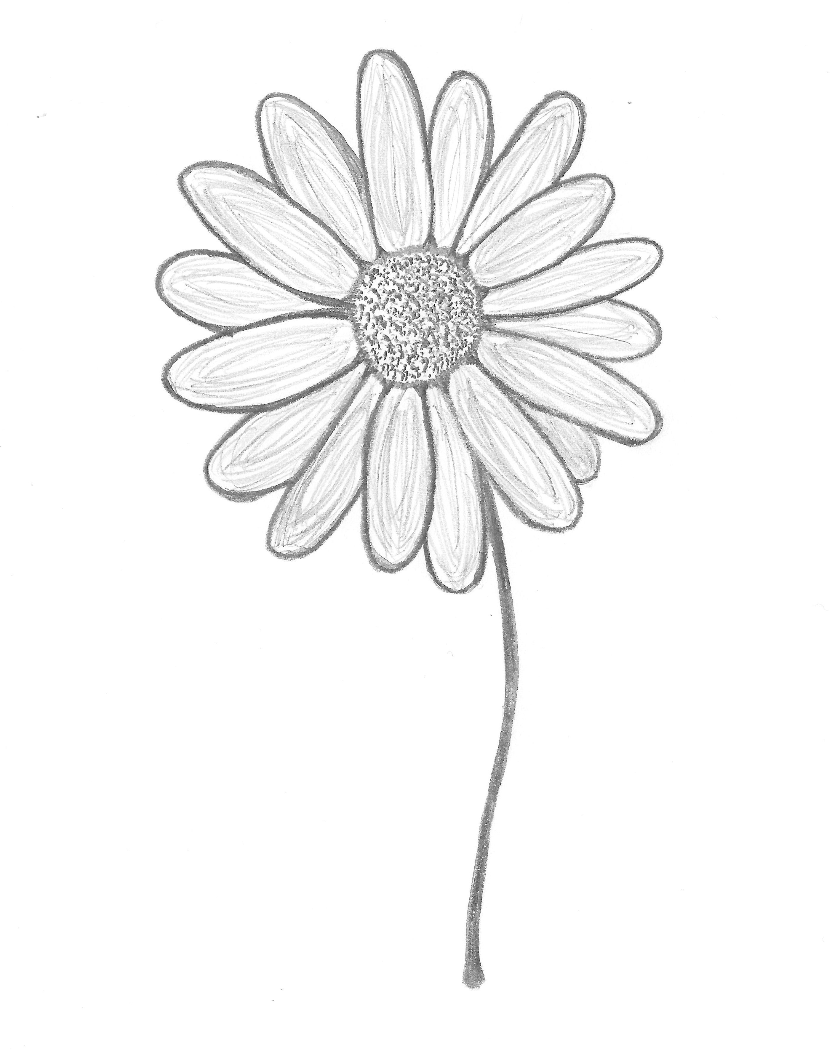 Daisy Drawing Tumblr At Getdrawings Free For Personal Use