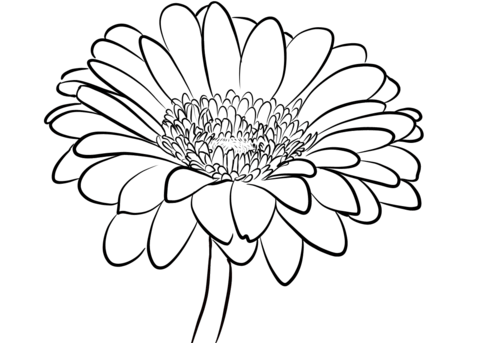 Gerbera Daisy Line Drawing Daisy Flower Drawing a...