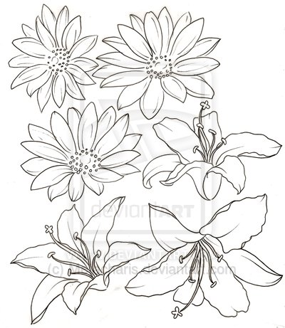 Daisy Flowers Drawing