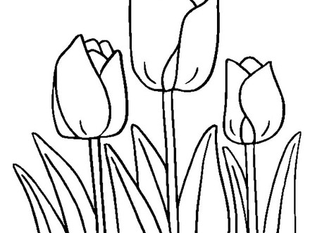 440x330 Drawings Flowers Tulips Coloring Pages Butterfly With Flowers