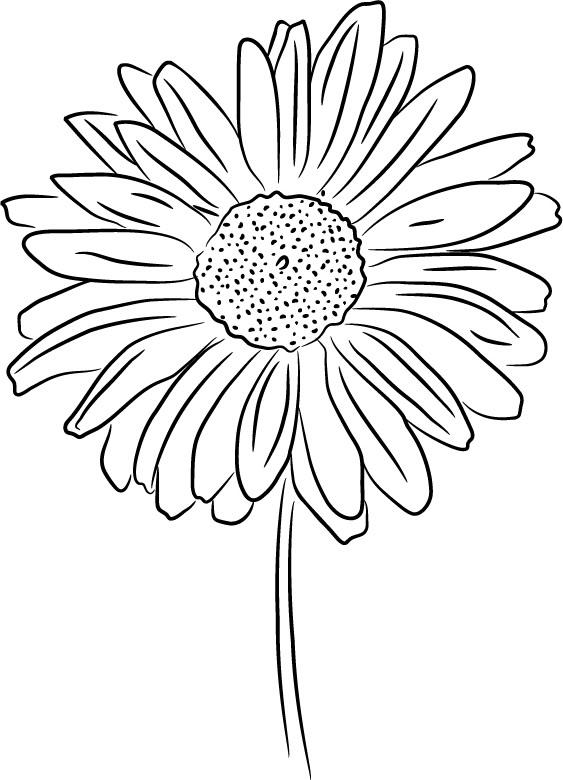 563x780 Drawn Daisy Daisy Flower