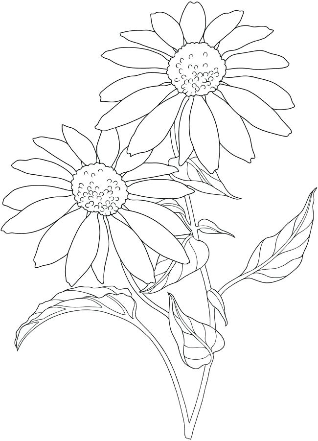 650x901 Flower Garden Outline Daisy Flower Coloring Page Garden Ice Rink