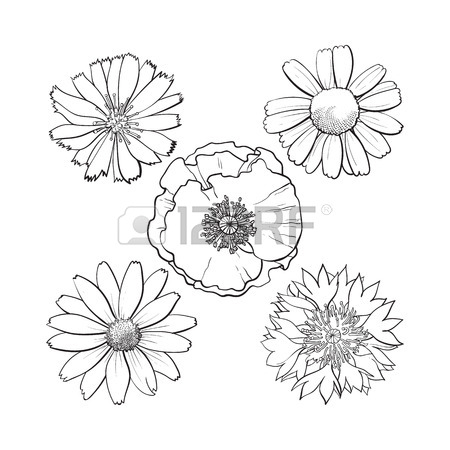 450x450 Seamless Pattern Of Top View Wild And Garden Flowers, Sketch