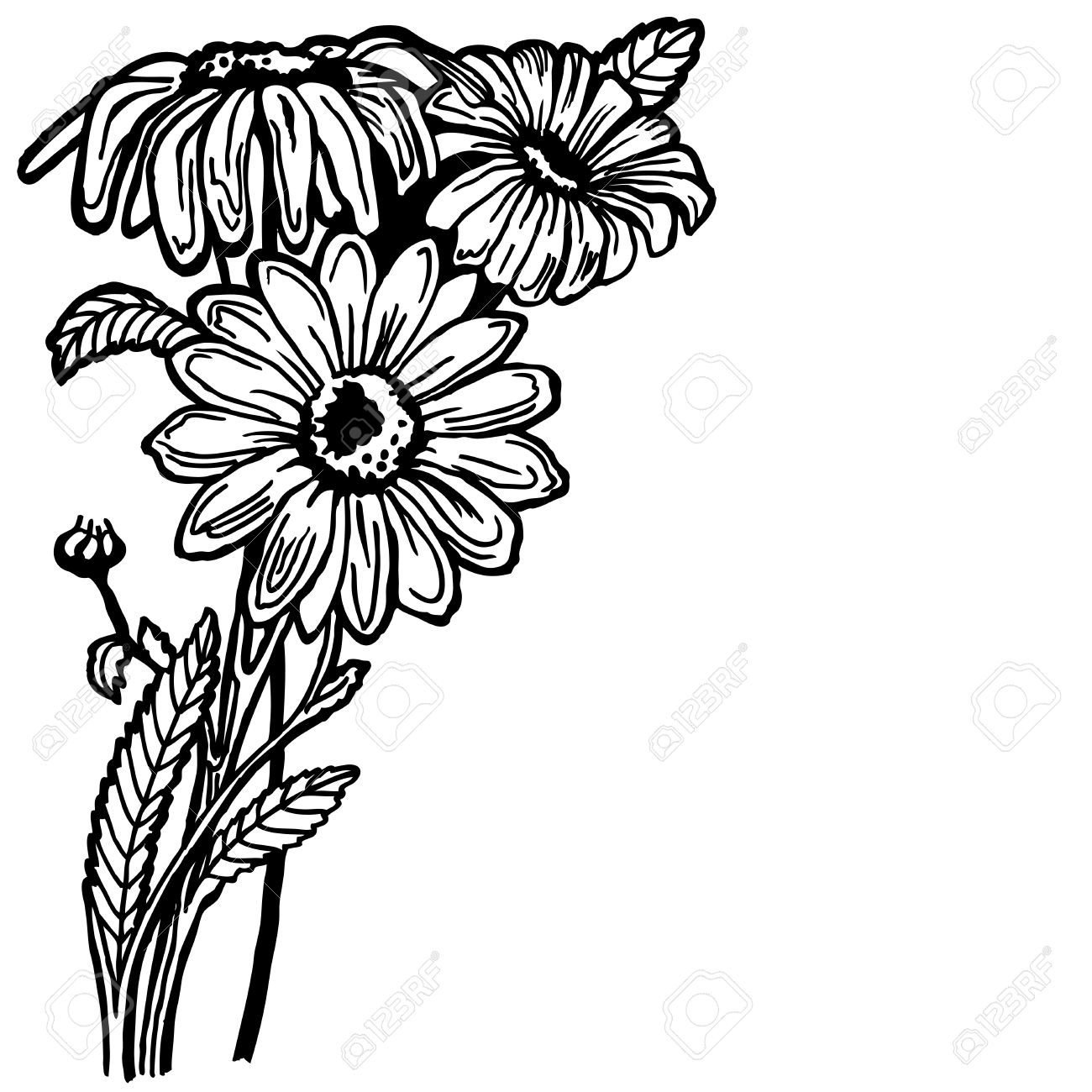 1300x1300 A Buch Of A Daisy With Flowers And Leaves. Drawing. Vintage
