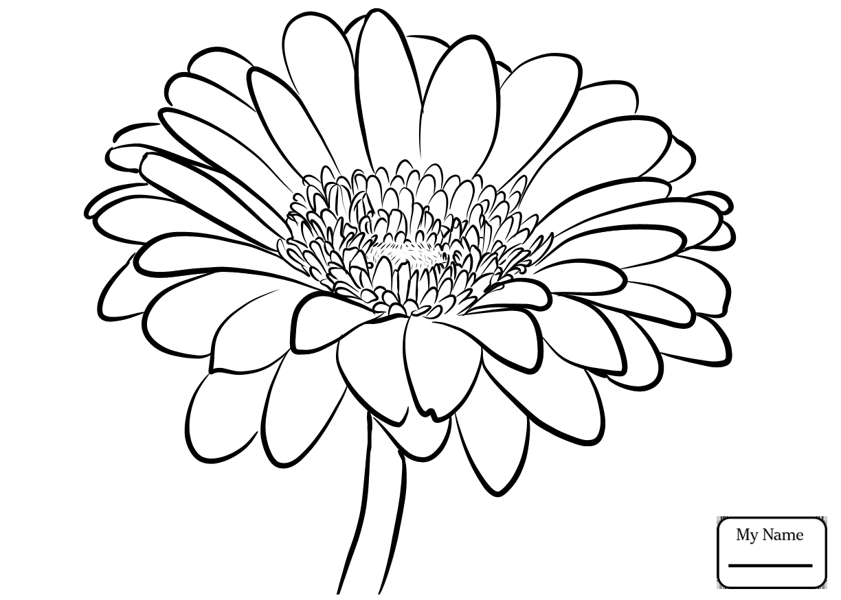 Daisy Flowers Drawing At Getdrawings Free For Personal Use